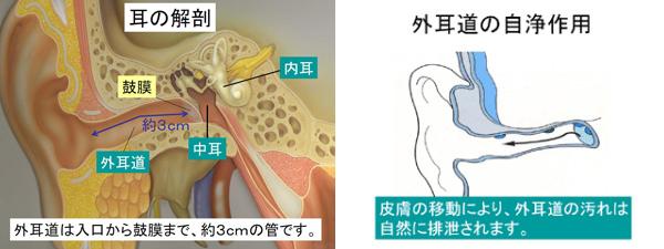 耳鼻 科 耳 掃除 だけ